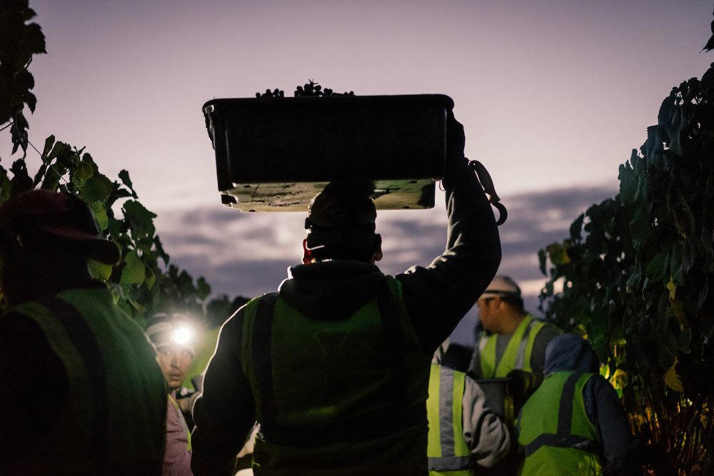 worker carrying a box of grapes